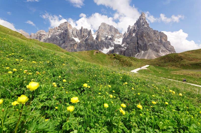 Paysage d'été de belles dolomites avec de belles fleurs sauvages fleurissant sur un flanc de coteau herbeux photo libre de droits