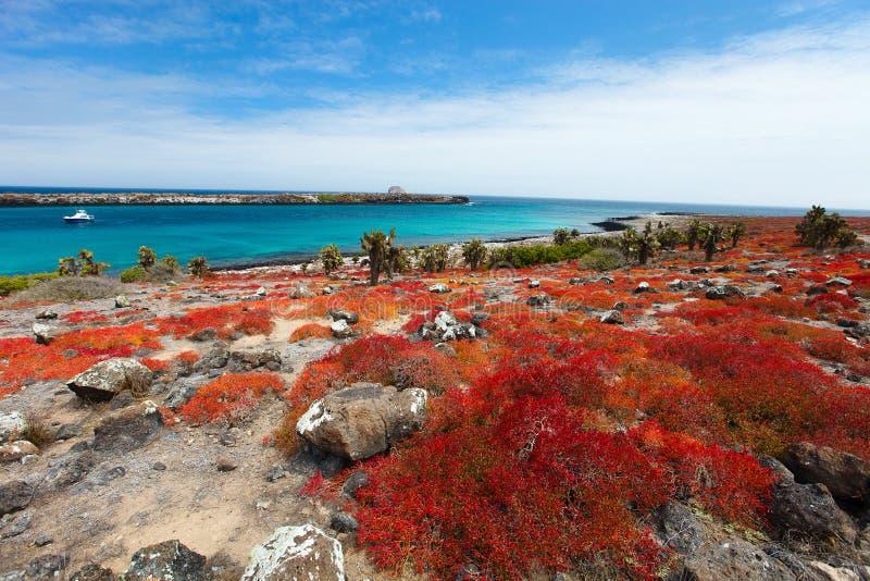 Paysage d'île de Galapagos photo libre de droits