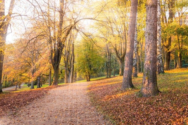 Paysage d'automne : Allée de parc avec les arbres jaunes et les feuilles tombées allumés avec la lumière du soleil photo stock
