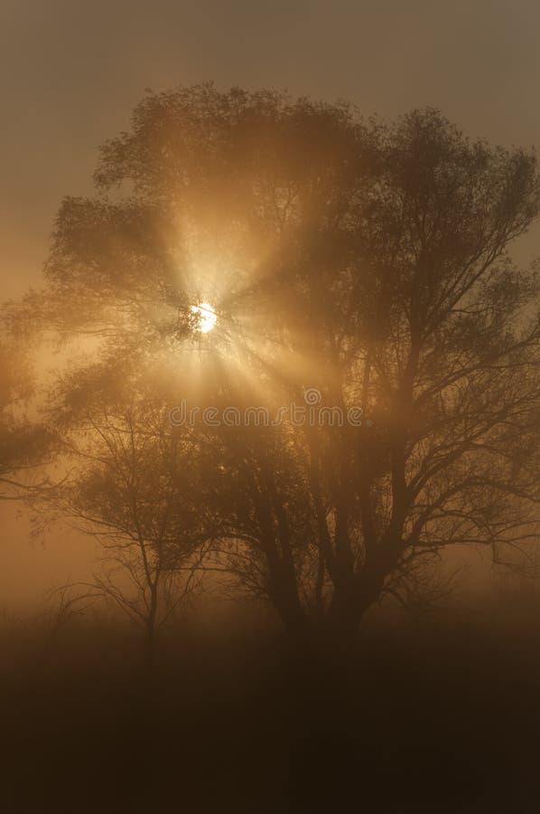 Paysage d'automne, arbres dans la brume à l'aube photo libre de droits
