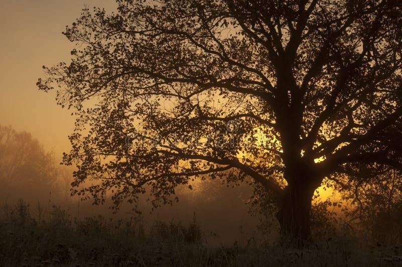 Paysage d'automne, arbres dans la brume à l'aube photos stock