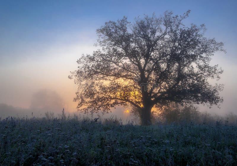 Paysage d'automne, arbres dans la brume à l'aube image libre de droits