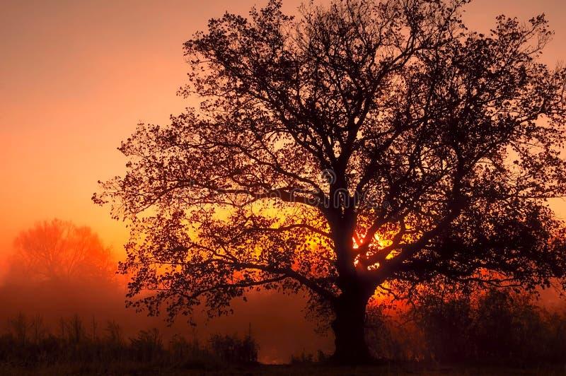 Paysage d'automne, arbres dans la brume à l'aube photos libres de droits