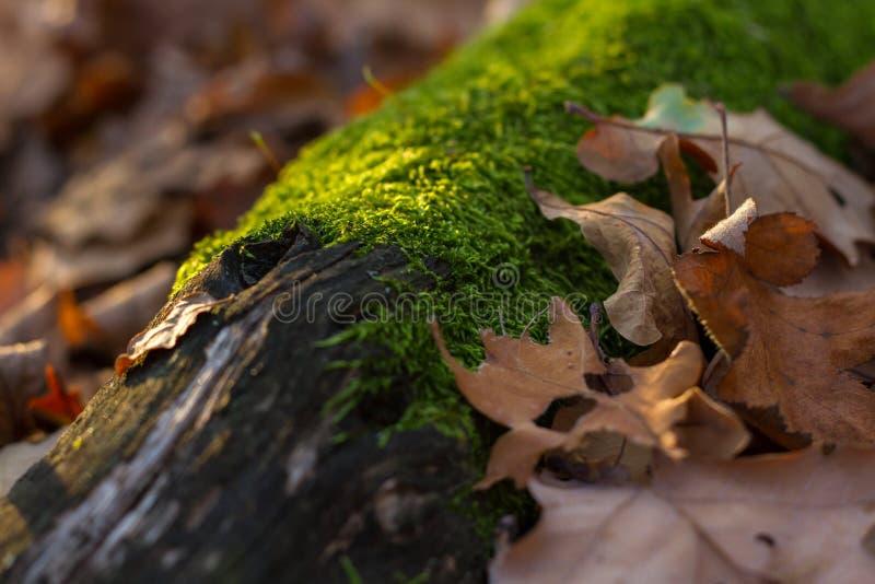 Paysage d'automne avec de la mousse sur un bois et des feuilles image stock