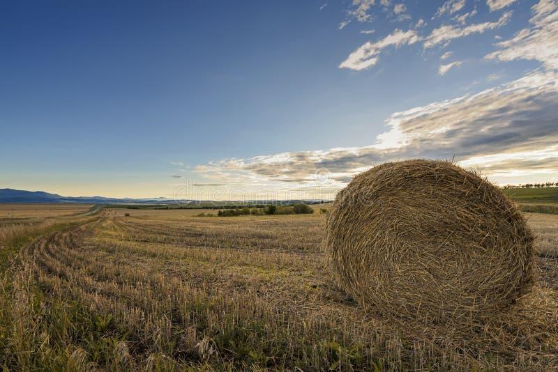 Paysage d'automne avec des petits pains de foin image libre de droits
