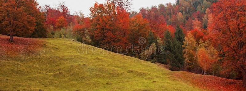 Paysage d'automne avec la vue colorée scénique du pré et de l'arbre FO photo libre de droits