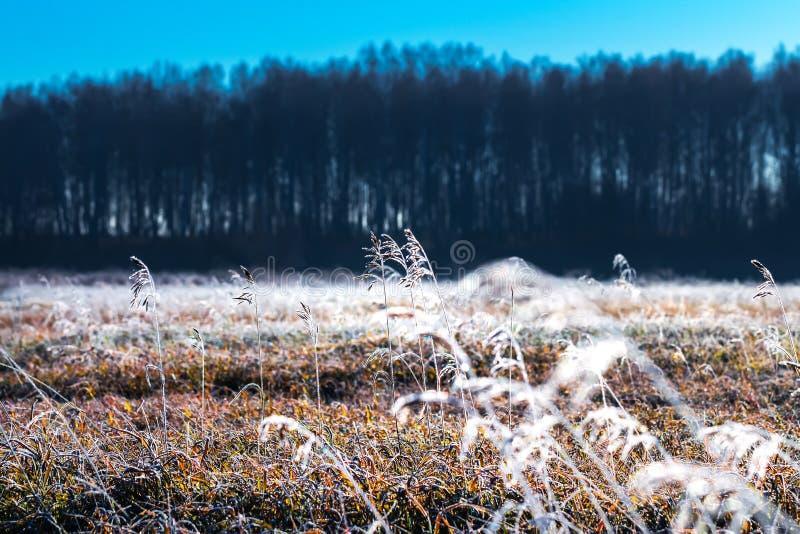 Paysage d'automne avec le gel photo libre de droits