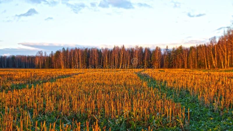 Paysage d'automne. avec le gisement de chaume au coucher du soleil photo libre de droits
