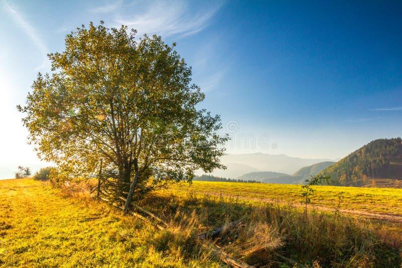 Paysage d'automne avec un arbre, lever de soleil dans un matin photo libre de droits