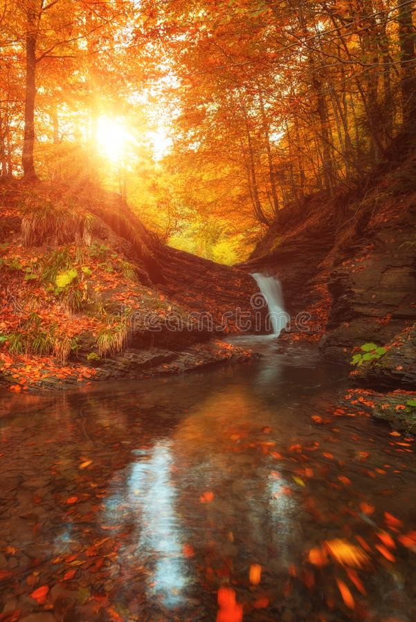Paysage d'or d'automne, crique de montagne avec la petite cascade dans la forêt photo stock