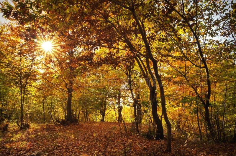 Paysage d'automne dans la forêt image stock