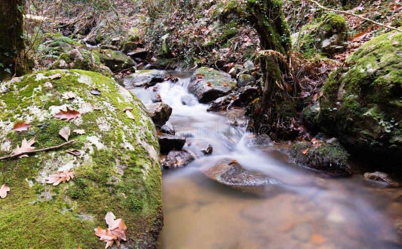 Paysage d'automne de chute dans la belle forêt colorée avec la rivière débordante de ruisseau dans l'exposition d'ONG image stock