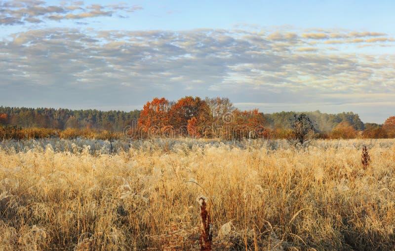 Paysage d'automne de pré sauvage le jour lumineux ensoleillé d'octobre Herbe et arbres d'or avec les feuilles rouges sur l'horizo image stock