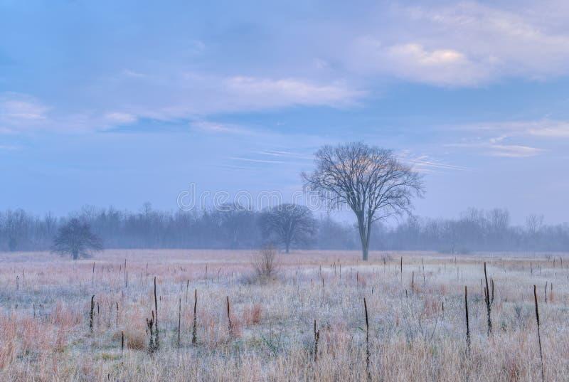 Prairie grande givrée d'herbe photos stock