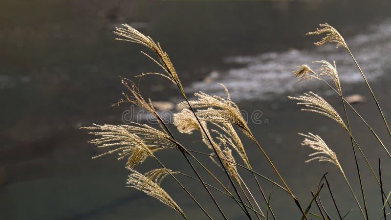 Paysage d'automne de Taizhou photos libres de droits
