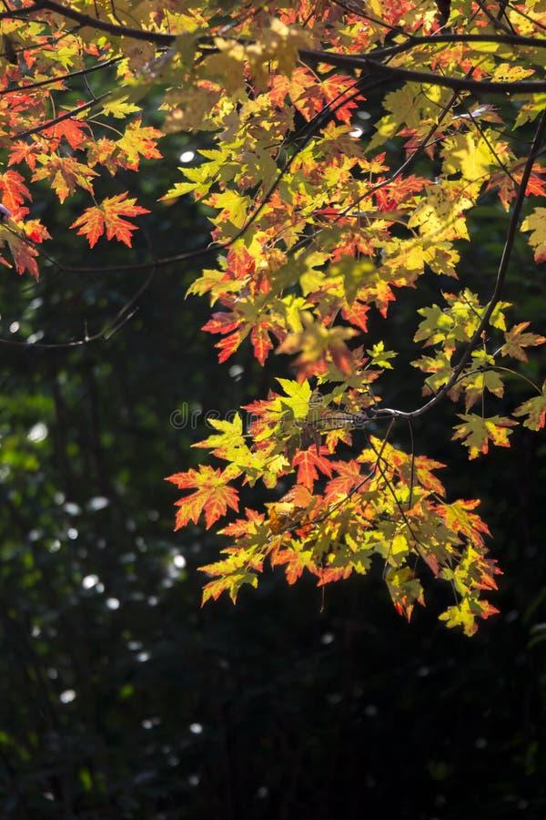 Paysage d'automne de Taizhou images stock