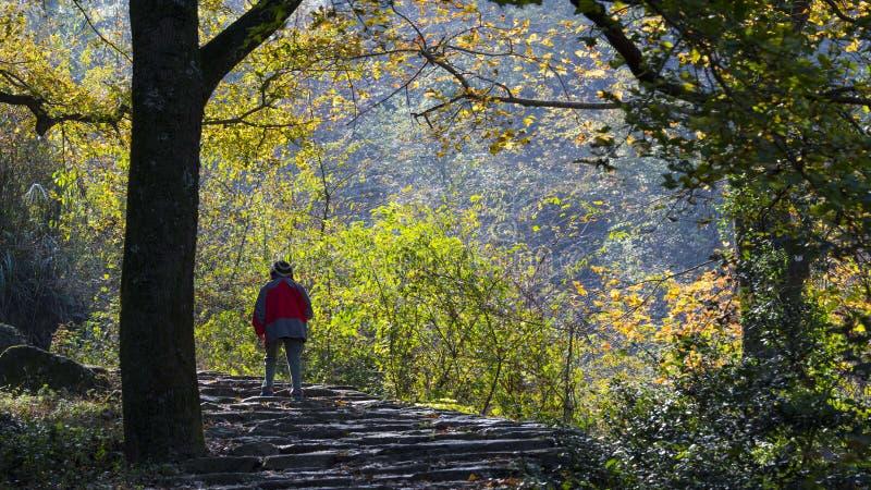 Paysage d'automne de Taizhou photo stock