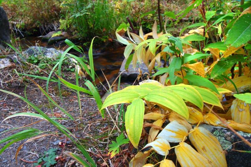 Paysage d'automne du Montana photographie stock