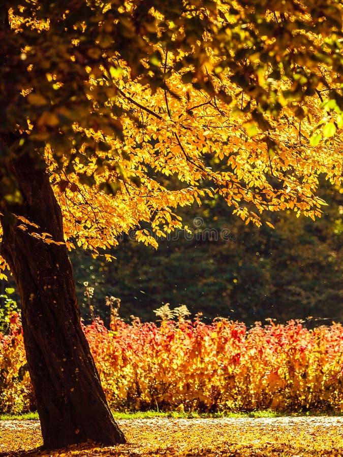 Paysage d'automne en parc photo libre de droits