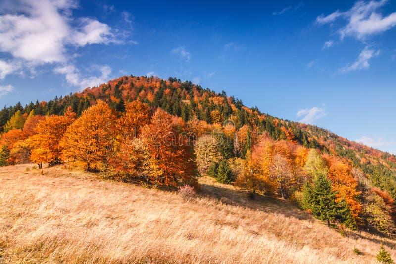 Paysage d'automne en parc national de Mala Fatra, Slovaquie photographie stock libre de droits
