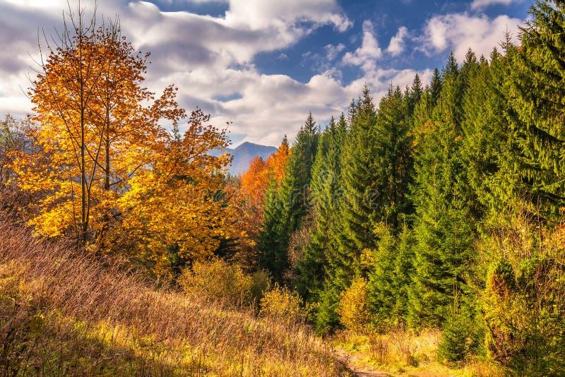 Paysage d'automne en parc national de Mala Fatra, Slovaquie images stock
