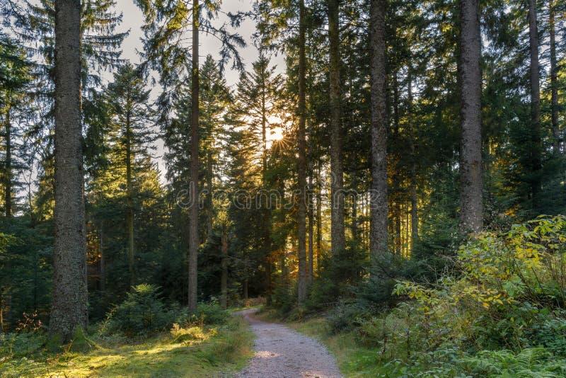 Paysage d'automne - forêt noire photos stock