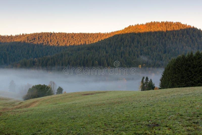 Paysage d'automne - forêt noire photos libres de droits