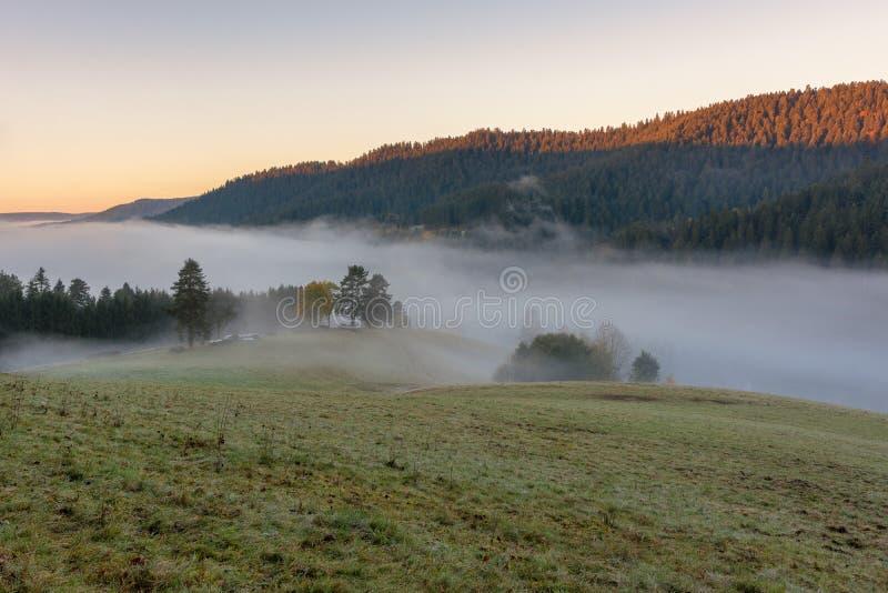 Paysage d'automne - forêt noire photographie stock