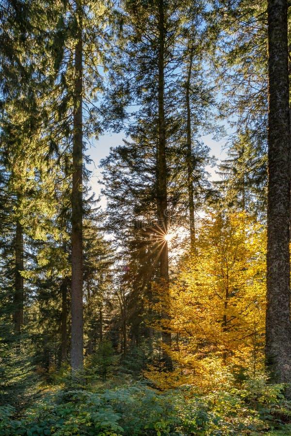 Paysage d'automne - forêt noire images stock