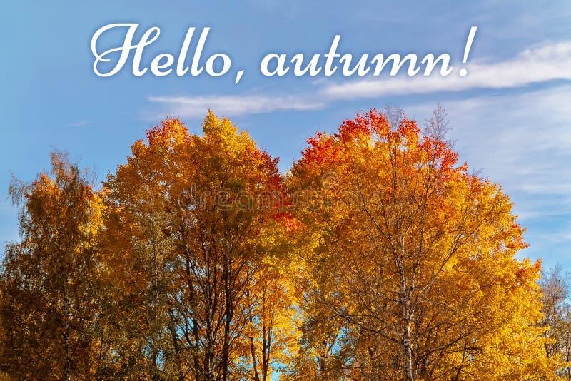 Paysage d'automne - les dessus des arbres jaune-orange contre le ciel bleu et l'inscription bonjour, automne - image image stock
