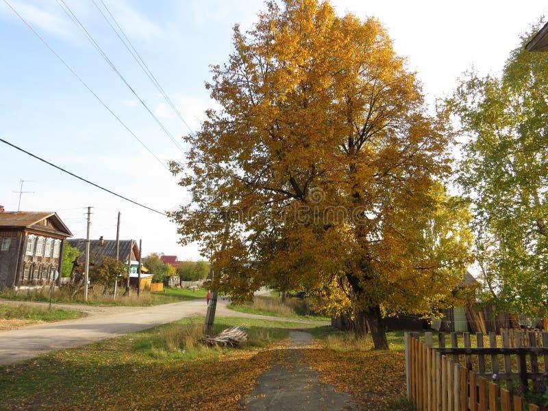 Paysage d'automne, parc d'automne dedans avec les arbres d'or d'automne par temps ensoleillé image stock