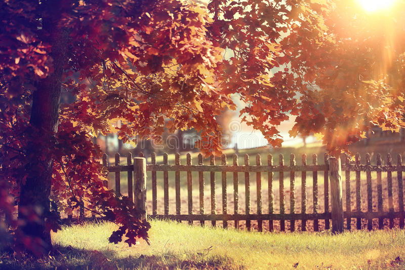 Paysage d'or d'automne photographie stock