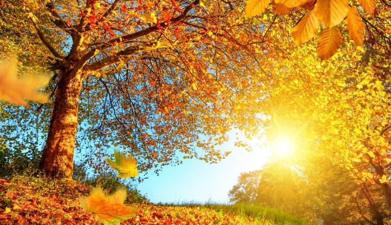 Paysage d'or d'automne avec un bon nombre de soleil photographie stock libre de droits