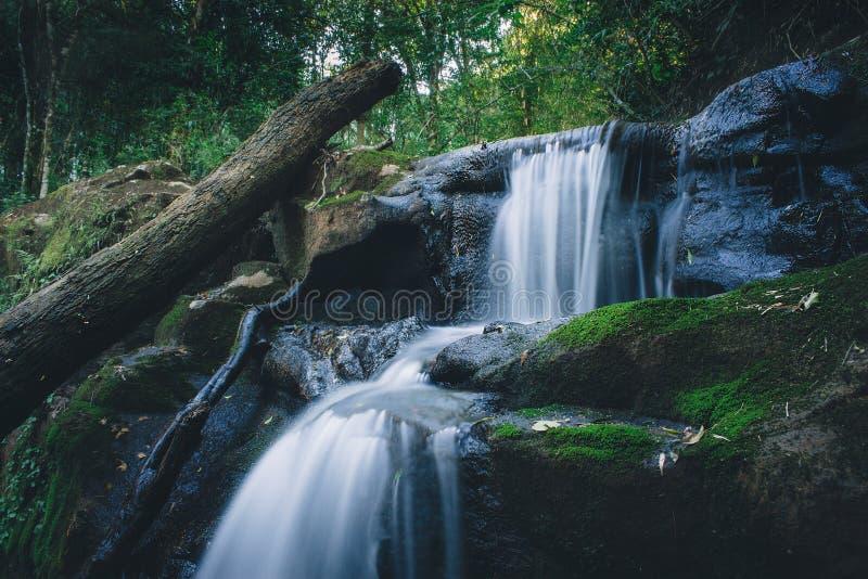 Paysage d'eau de source de forêt tropicale Longue exposition photo libre de droits