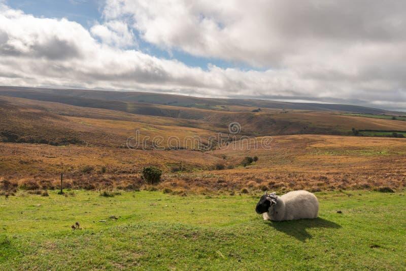 Paysage d'Exmoor, Angleterre, R-U photographie stock