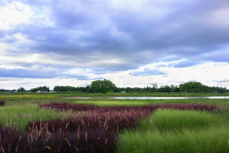 Paysage d'herbe photos stock