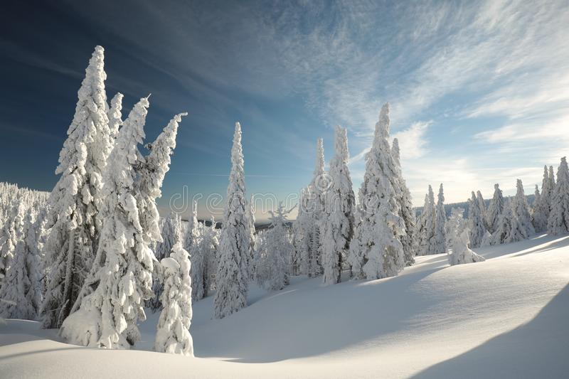 Paysage d'hiver à l'aube images libres de droits