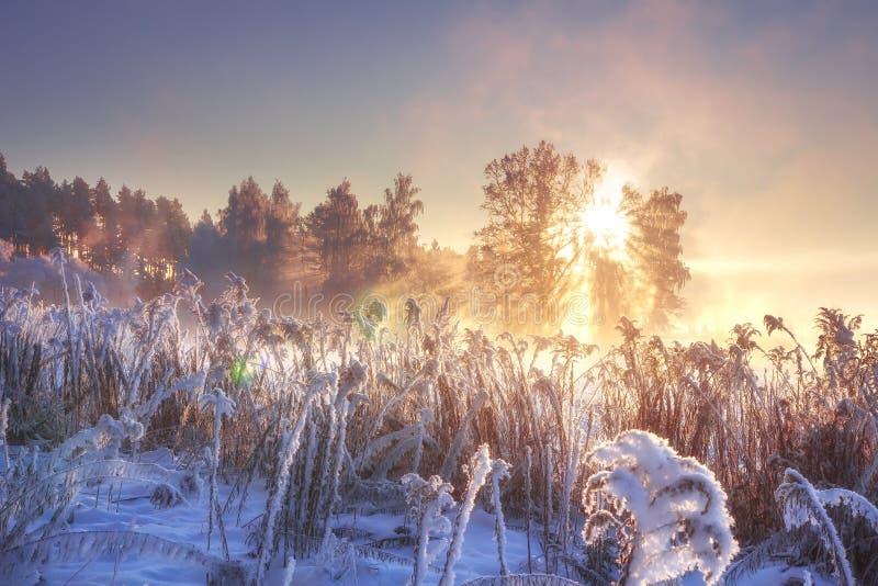 Paysage d'hiver à la lumière du soleil rose au lever de soleil de matin Hiver de paysage Nature givrée Lumière du soleil dans la  images stock