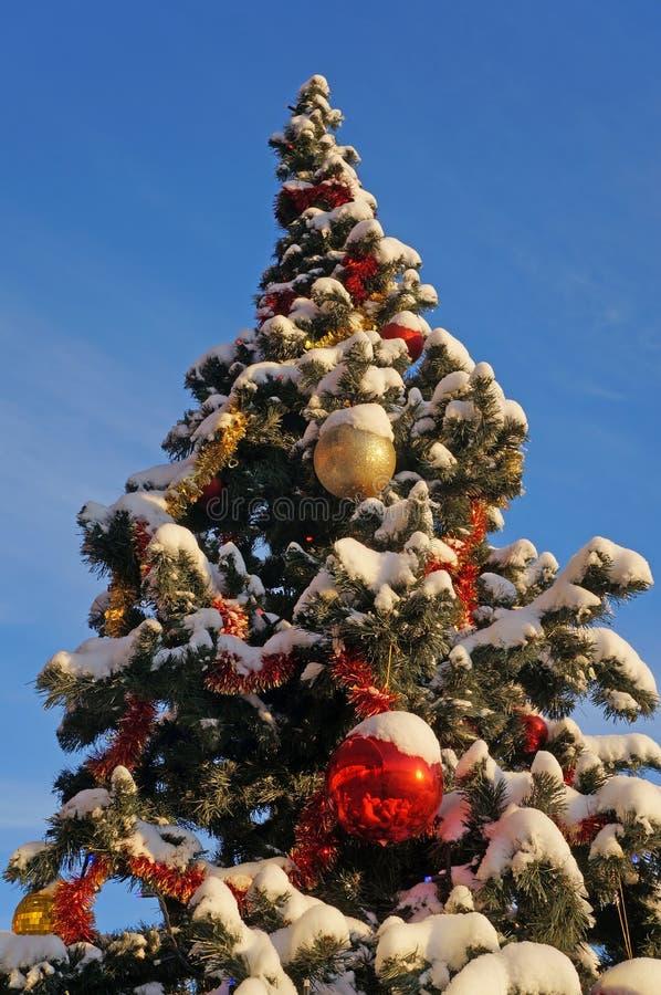 Paysage d'hiver, arbre de Noël neigeux photo libre de droits