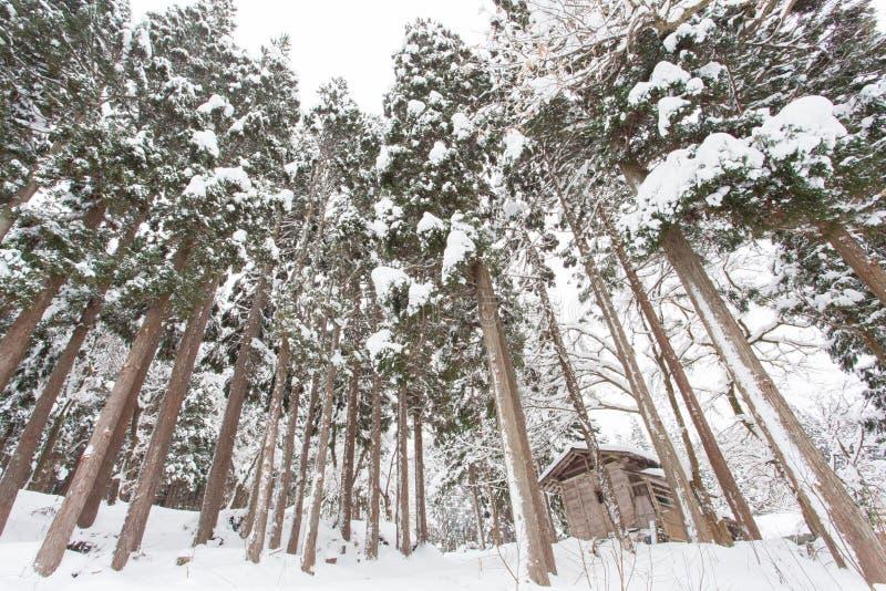 Download Paysage D'hiver, Arbres Avec La Neige Image stock - Image du extérieur, nature: 87701457