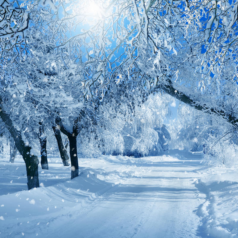 paysage d 39 hiver arbres givr s photo stock image du blanc hiver 62787298. Black Bedroom Furniture Sets. Home Design Ideas