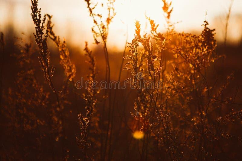 Paysage d'hiver avec des herbes sur le coucher du soleil images stock