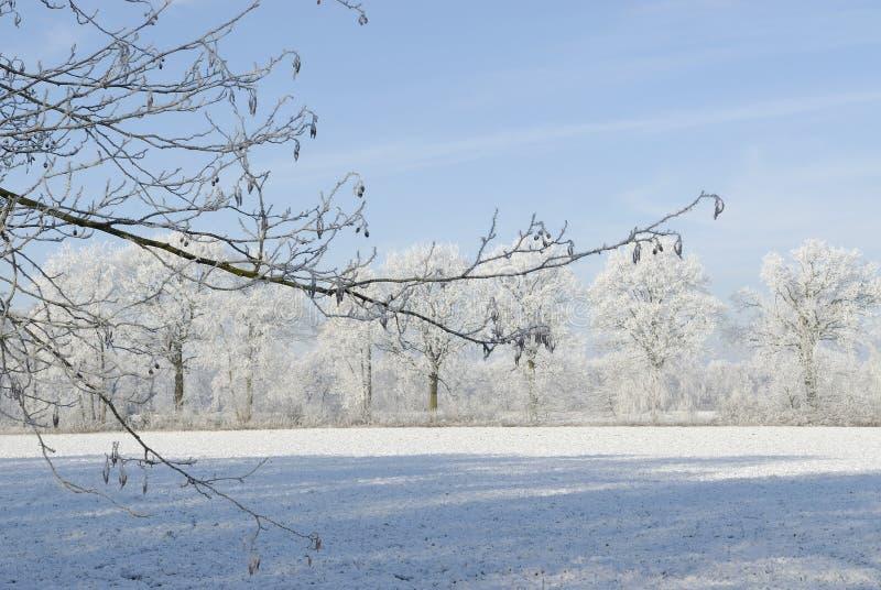 Paysage d'hiver avec la gelée photographie stock libre de droits