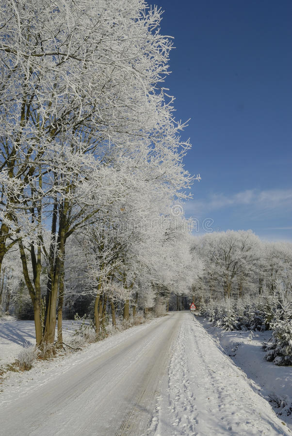 Paysage d'hiver avec la gelée images libres de droits