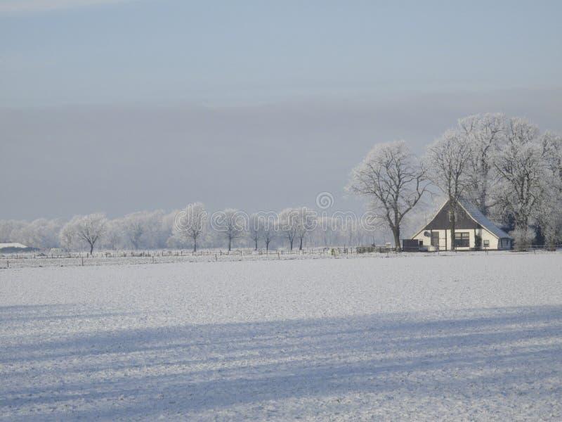 Paysage d'hiver avec la gelée photos stock