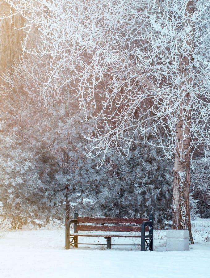 Paysage d'hiver avec la neige, bancs couverts de neige parmi les arbres givrés d'hiver images stock