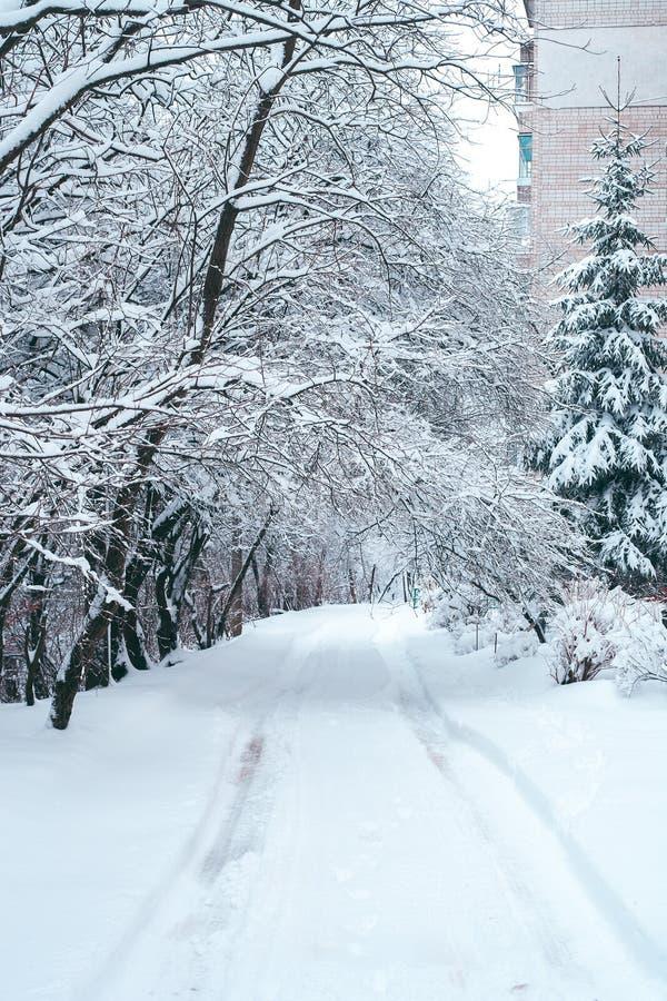Paysage d'hiver avec la rue neigeuse et les arbres couverts par neige photographie stock libre de droits