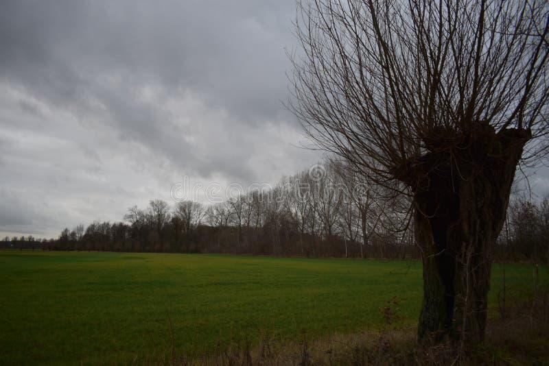 Paysage d'hiver avec le ciel nuageux photographie stock