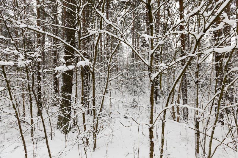 Paysage d'hiver, chutes de neige photographie stock libre de droits