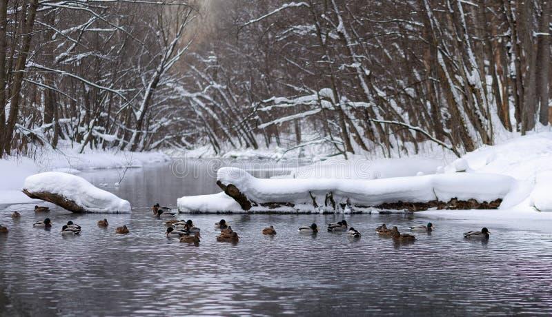 Paysage d'hiver dans la banlieue de Kazan photos libres de droits